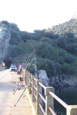 Puente_cogolludo3
